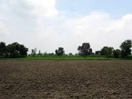 Agriculture land for sale in Sholavandan - Lands and Plots